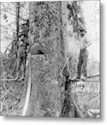 Us Forestry Metal Print