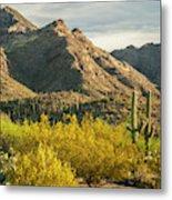 Usa, Arizona, Sabino Canyon Recreation Metal Print