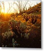 Usa, Arizona, Sonoran Desert, Ocotillo Metal Print