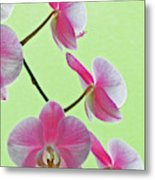 Usa, California Close-up Of Blooming Metal Print