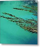 Usa, California, Seaweed Floating Metal Print