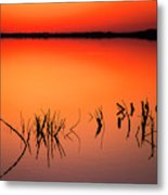 Usa, Florida Silhouettes Of Dead Tree Metal Print