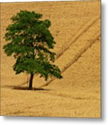 Usa, Washington State, Palouse Region Metal Print