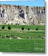 Utah Farm Cows Metal Print