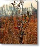Autumn Grass6277 Metal Print