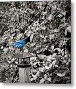 Vagabon Blue Bird Metal Print