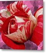 Valentine's Day Rose Metal Print