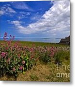 Valerian By A Stone Wall On The Northumberland Coast Metal Print