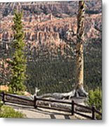 Valley Light Metal Print
