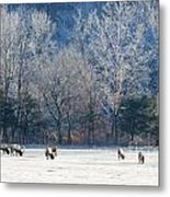 Valley Of Elk Metal Print