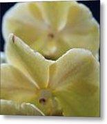 Vanilla Orchid Metal Print