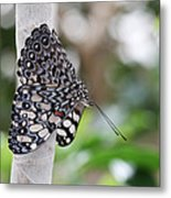 Variable Cracker Butterfly Metal Print
