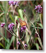 Variegated Fritillary Butterfly Metal Print