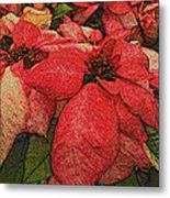Variegated Poinsettia Metal Print