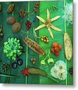 Variety Of Seeds And Fruits Metal Print