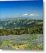 Vast View And Lupine Metal Print