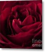 Velvet Rose Mirrored Edge Metal Print