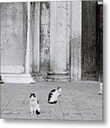 Cats Of Venice Metal Print