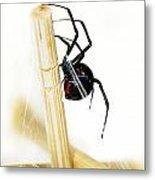 Venomous Black Widow Spider Metal Print