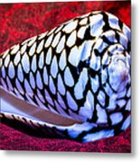 Venomous Conus Shell Metal Print