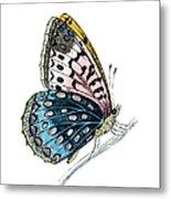 Venus Fritillary Butterfly Metal Print