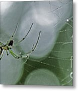 Venusta Orchard Spider Metal Print