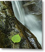 Vermont Aspen Leaf Waterfall Camels Hump Duxbury Metal Print