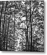 Vermont Forest Sunrise Ricker Pond Black And White Metal Print