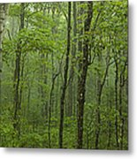Vermont Mount Mansfield Green Forest Fog Panorama Metal Print