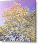 Vermont Tree Light Leak Sunflare  Metal Print