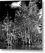 Vernon Lake Trip Metal Print