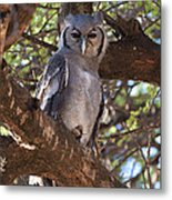 Verreauxs Eagle Owl In Tree Metal Print