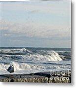 Seagull In Winter Metal Print