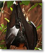 Very Fruity Bat Metal Print