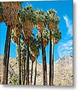 Very Tall Fan Palms In Andreas Canyon In Indian Canyons-ca Metal Print