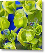 Very Young Hydrangea Metal Print