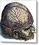 Vesalius: Cranium Metal Print