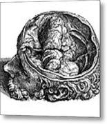 Vesalius: Olfactory Organs Metal Print