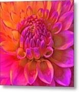 Vibrant Dahlia Flower Metal Print