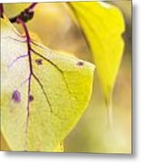 Vibrant Leaves Metal Print by Dana Moyer