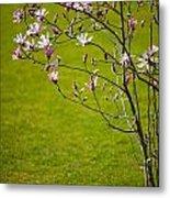 Vibrant Pink Magnolia Blossoms Metal Print