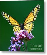 Viceroy Butterfly Square Metal Print