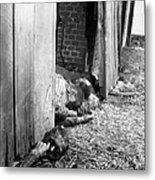 Victims Of The Gardelegen Massacre Metal Print