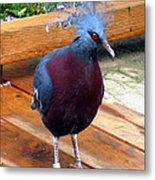 Victoria Crowned Pigeon Strutting Around Metal Print