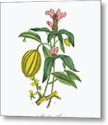 Victorian Botanical Illustration Of Metal Print