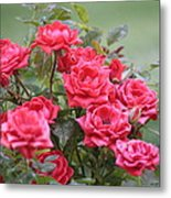 Victorian Rose Garden Metal Print