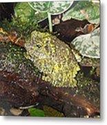 Vietnamese Mossy Frog Metal Print