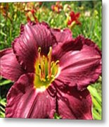 Viette's Daylily. Dark Purple 01 Metal Print
