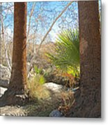 View From Creek Bed In Andreas Canyon In Indian Canyons-ca Metal Print
