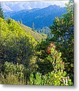 View From Trail To West Point Inn On Mount Tamalpais-california  Metal Print
